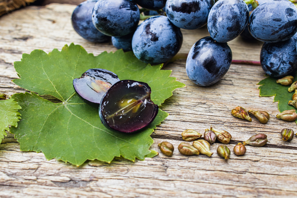 Estudo mostra que a suplementação com extrato de semente de uva, juntamente com uma dieta calórica restrita, melhora os fatores de risco cardiovascular em adultos obesos ou com sobrepeso